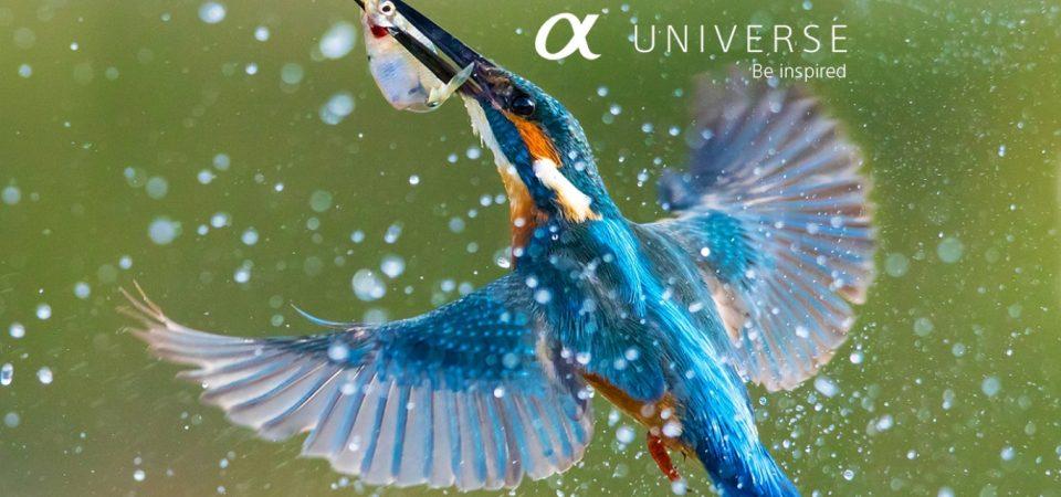 Site-ul Sony α Universe Europe este online   Sony lansează un nou hub pentru a scoate în evidență frumusețea fotografiei europene